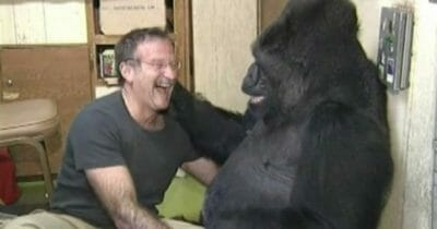 Koko Robin Williams