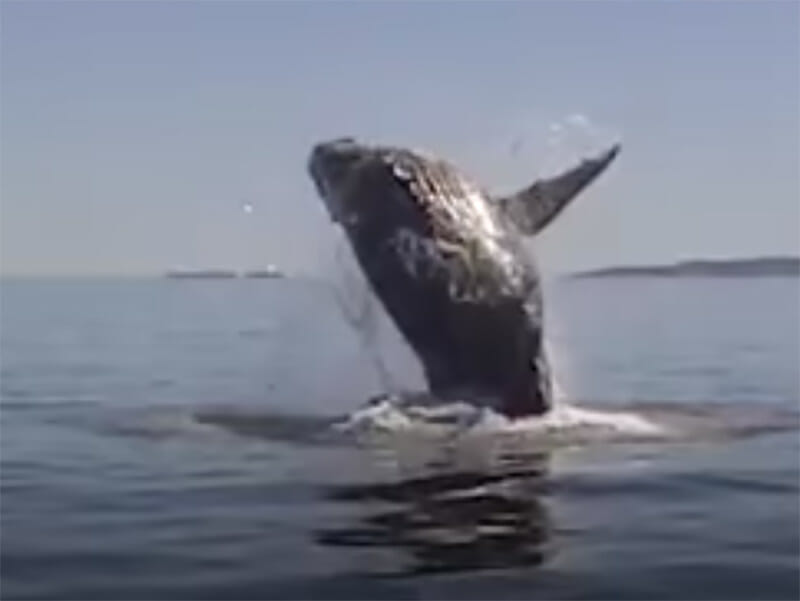 humpback whale, rescue, michael fishbach