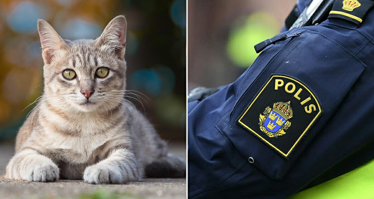 Katt, sköt, polisen, Kristinehamn, djurplågeri